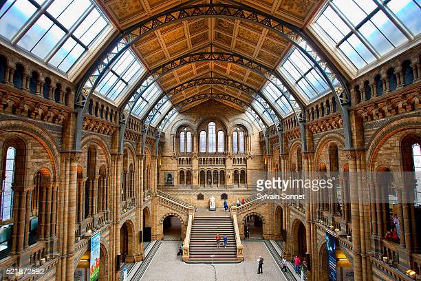 central hall of the natural history museum, london, england - ロンドン自然史博物館 ストックフォトと画像