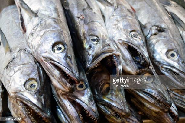 central market chile - merluza fotografías e imágenes de stock