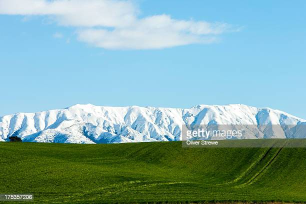 central otago farmland - invercargill stock pictures, royalty-free photos & images