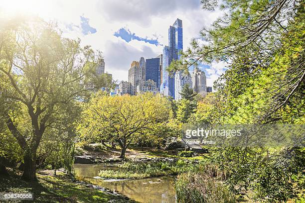Central park and New York City on sunny day