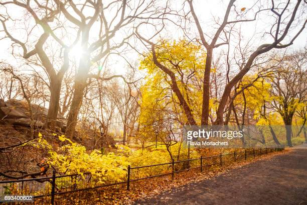 Central Park in autumn, New York City