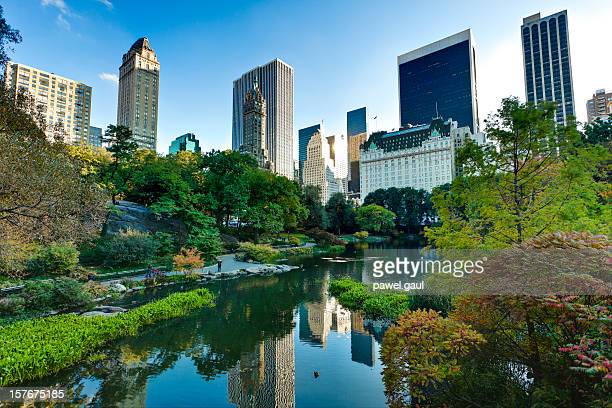 central park in new york city - midtown manhattan stock pictures, royalty-free photos & images