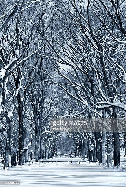 Central Park Mall Winter