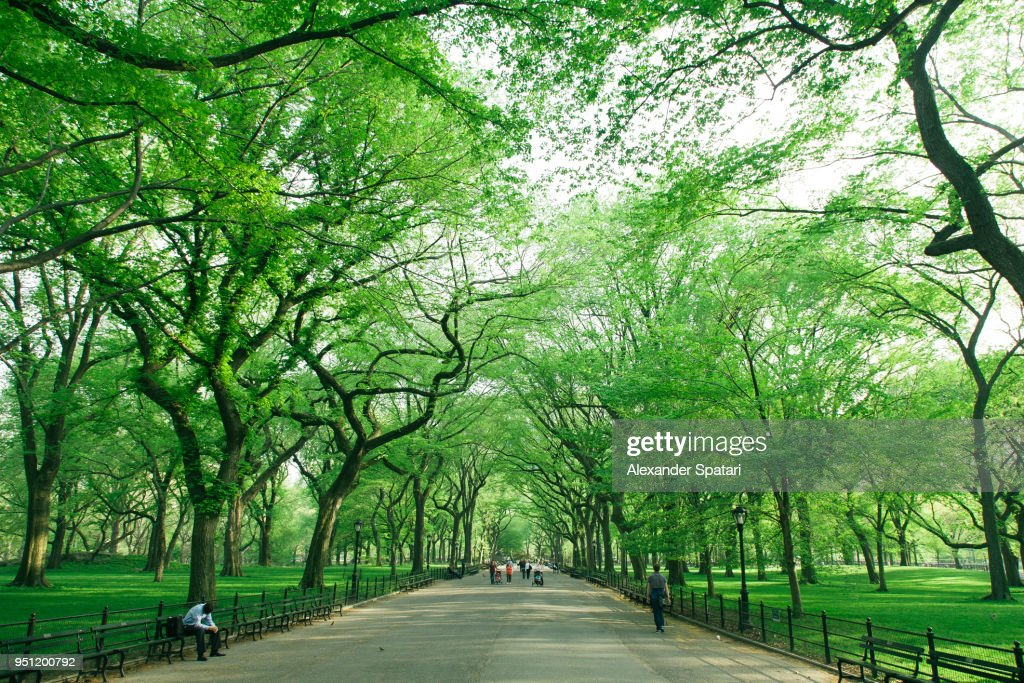 Central Park Mall with green trees, New York City, USA : Stock Photo