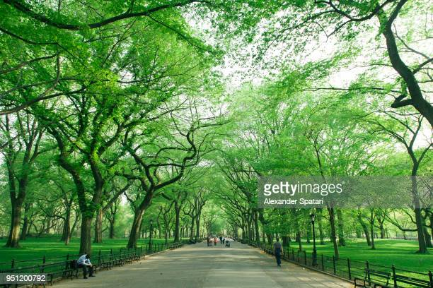 central park mall with green trees, new york city, usa - central park stock pictures, royalty-free photos & images