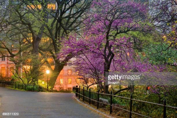 nyc セントラル パーク マンハッタン スプリング 夕暮れ シーン - アッパーイーストサイドマンハッタン ストックフォトと画像