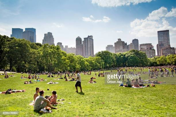 central park, new york - central park stock photos and pictures
