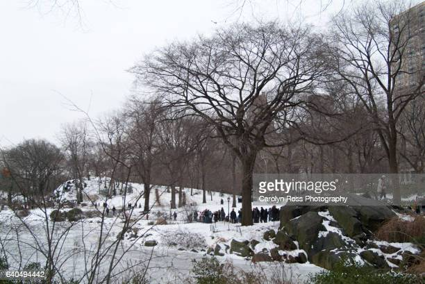 central park - carolyn ross stock pictures, royalty-free photos & images