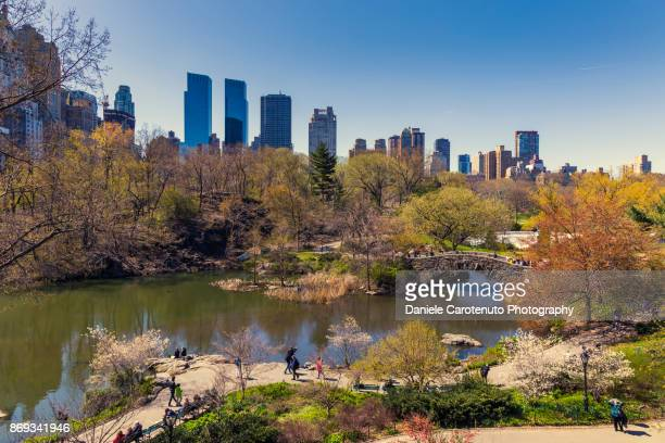 central park - daniele carotenuto stock pictures, royalty-free photos & images