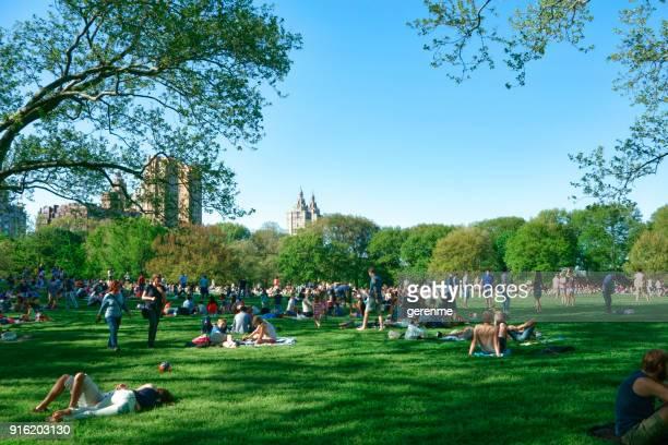 central park  - central park manhattan stock-fotos und bilder