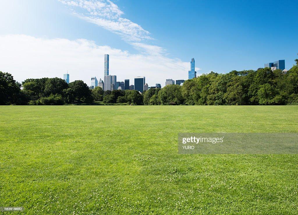 Central Park-Grassland : Stock Photo