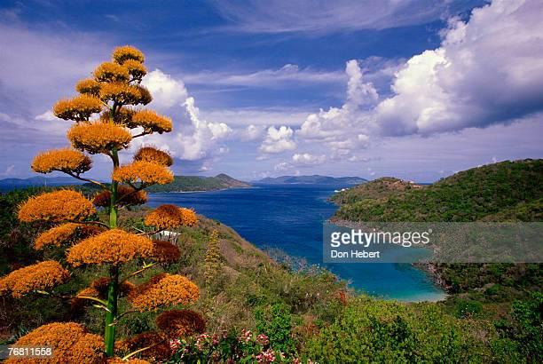 century tree, st thomas, virgin islands - paisajes de st thomas fotografías e imágenes de stock