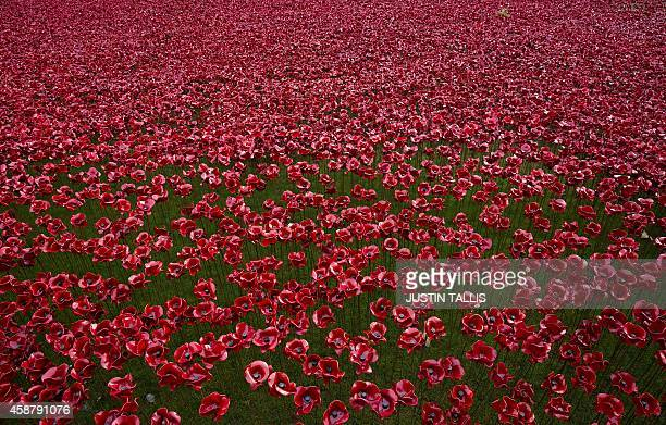 """Ceramic poppies are pictured on Armistice Day as the final poppy is added to the """"Blood Swept Lands and Seas of Red"""" installation by ceramic artist..."""