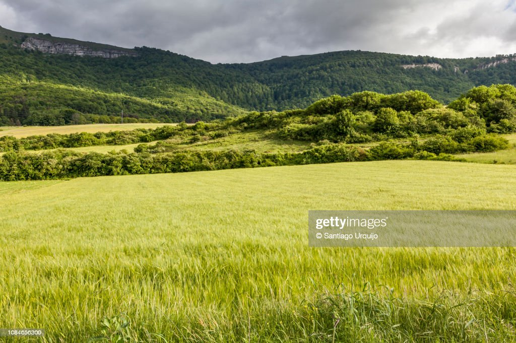 Cereal fields and forests : Foto de stock
