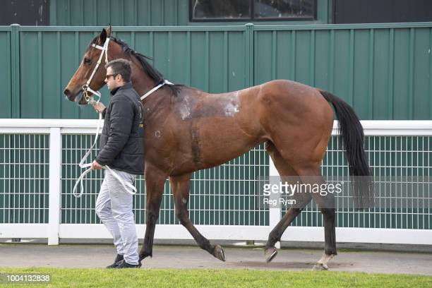 Cerebellum after winning the Geelong Homes FM Maiden Plate at Geelong Synthetic Racecourse on July 23 2018 in Geelong Australia