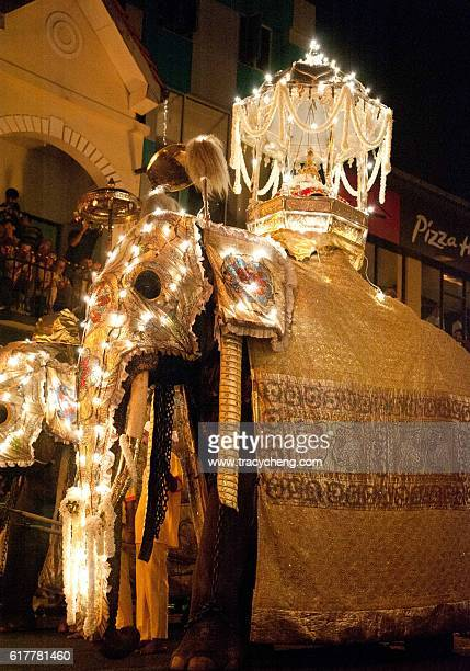 ceremonial elephant - kandy kandy district sri lanka stock pictures, royalty-free photos & images