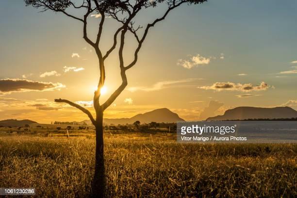 cerrado vegetation at sunset in chapada dos veadeiros, goias, brazil - cerrado stock pictures, royalty-free photos & images