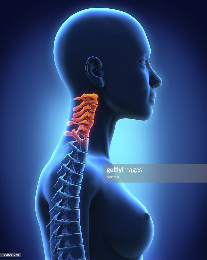 Cervical Spine Anatomy Stock Photo Getty Images