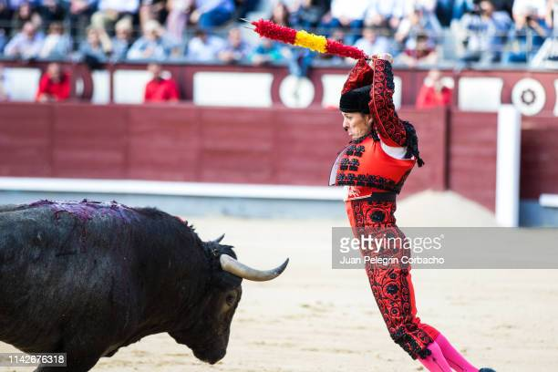60 Top Bullfight Pictures, Photos and Images - Getty Images