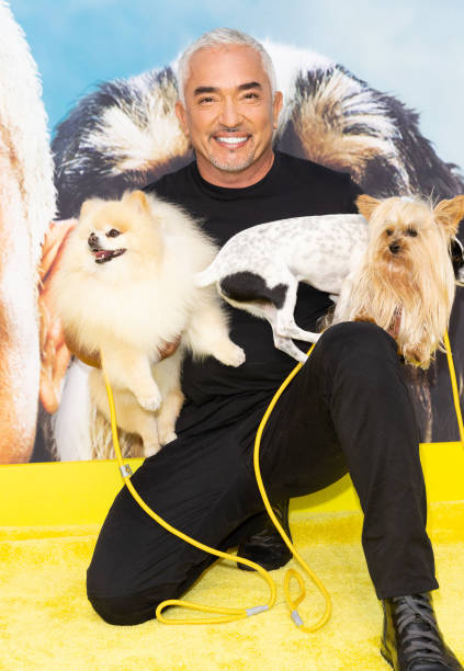 """CA: National Geographic Hosts Cesar Millan: Better Human Better Dog Premiere """"Pawty"""" And Live Screening"""