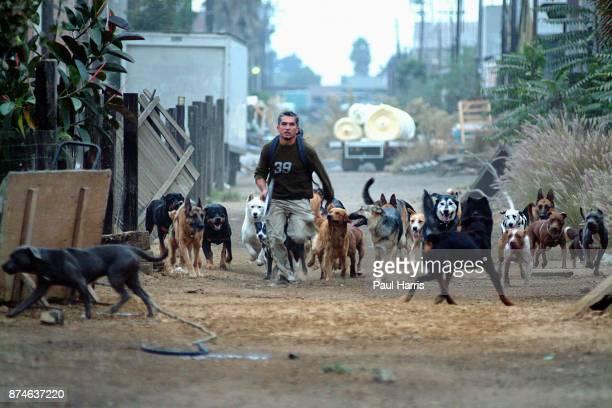 Cesar Millan S Dog Psychology Center In Los Angeles