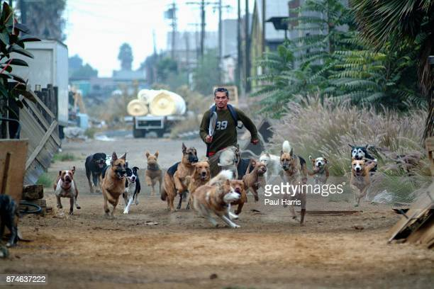 """Cesar Millan who owns """" The Dog Psychology Center of Los Angeles, just after dawn in an alley in downtown Los Angeles exercises more than 30 dogs,..."""