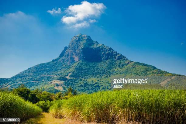 cesela nature park mauritius island, africa.
