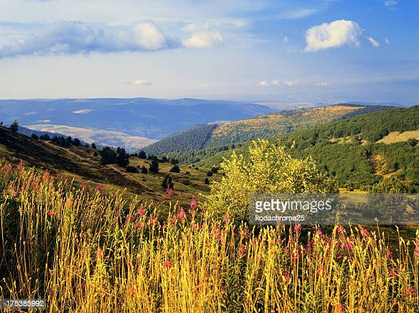 cevennes - languedoc rousillon stock pictures, royalty-free photos & images