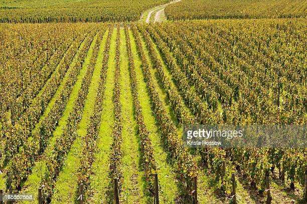 Vineyards around the town of Chablis in Burgundy.