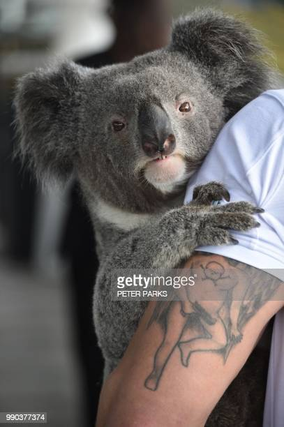 Chad Staples from the Featherdale Wildlife Sanctuary holds a fouryearold koala named Archer at a media event in Sydney on July 3 2018 Australia's...
