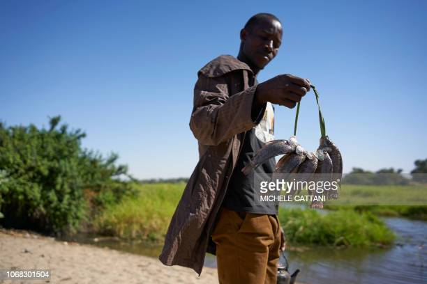 A Chadian fisherman holds his catch on the shores of Lake Chad near the village of Tagal in Southern Chad on November 8 2018