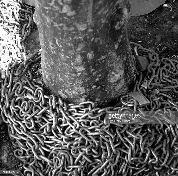 chain and padlock around tree trunk - lyn holly coorg photos et images de collection
