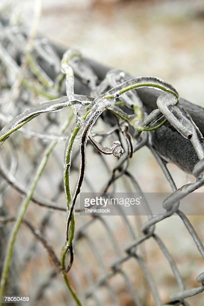 chain link fence with vine and ice - thinkstock stock-fotos und bilder