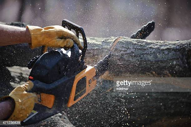 Chain saw cuts a fallen tree
