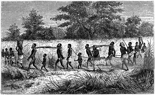 Chained and yoked slaves on the march to the trading station 1965 A print from The Slave Trade and its Abolition edited by John LangdonDavies...