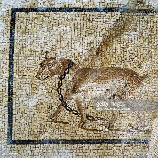 Chained dog detail from the mosaic floor in the vestibulum of the Roman villa ancient city of Lilybaeum Marsala Sicily Italy Roman civilisation...