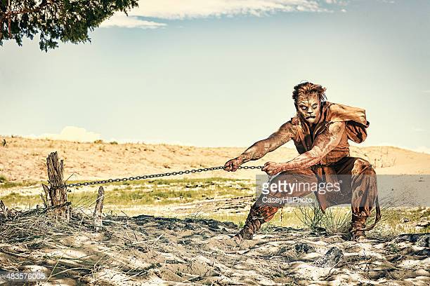 chained lion man - lion feline stock pictures, royalty-free photos & images