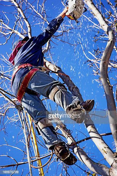 Chainsaw Arborist Tree Surgeon High Cutting