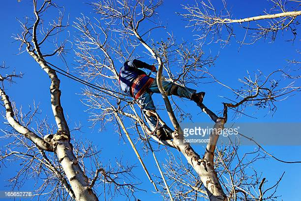 Chainsaw Arborist Tree Surgeon High Cutting Sawdust
