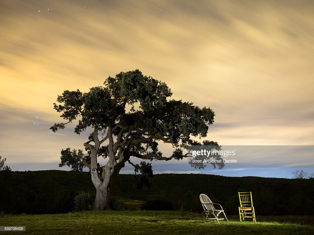 Chair and armchair under a great tree in the night : Foto stock