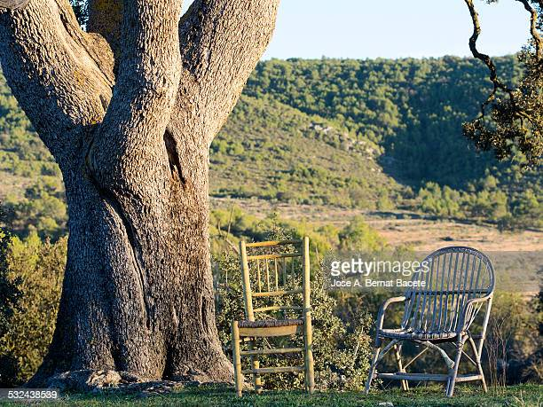 Chair and armchair under the shade of a great tree