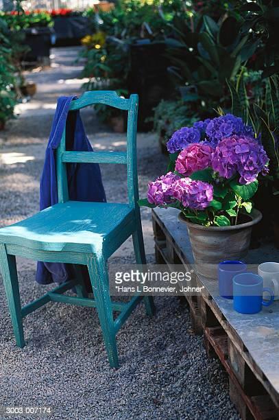 Chair and Hydrangeas in Garden
