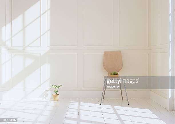 Chair and plant