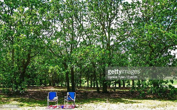 Chairs By Trees In Forest On Sunny Day