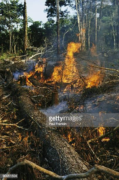 chakra burning slash and burn agriculture madre de dios, peru