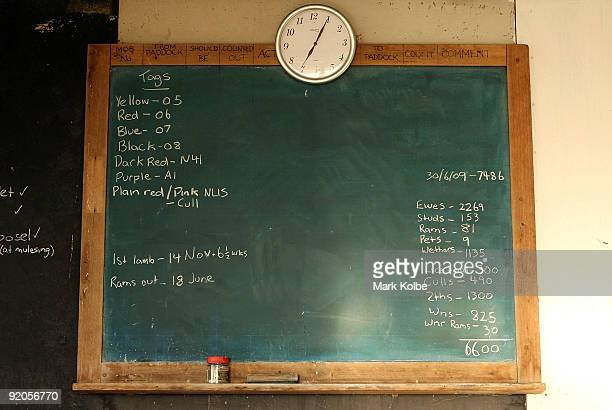 Chalk board displays sheep details at the start of a day of spring shearing at Cherry Hill Pastoral Company property on October 19, 2009 in Uralla,...
