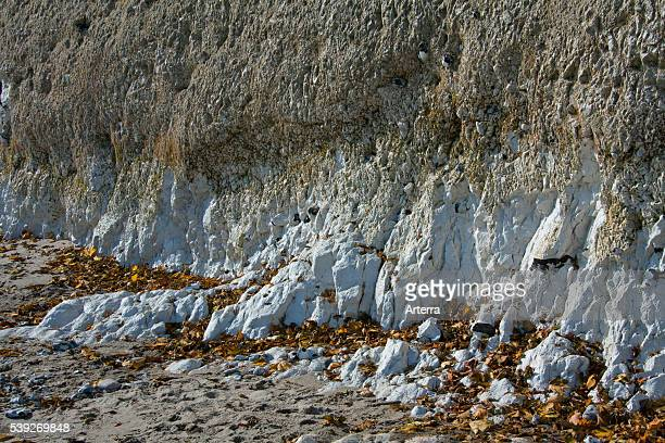 Chalk cliff in Jasmund National Park on Rugen Island on the Baltic Sea Germany