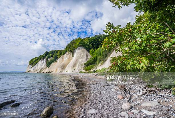 chalk cliffs at jasmund national park rã¼gen - 炭酸石灰 ストックフォトと画像