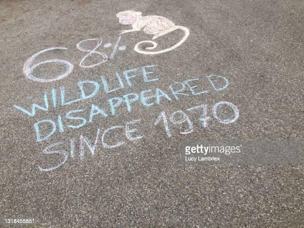 chalk drawing for wildlife protection - lucy lambriex stockfoto's en -beelden