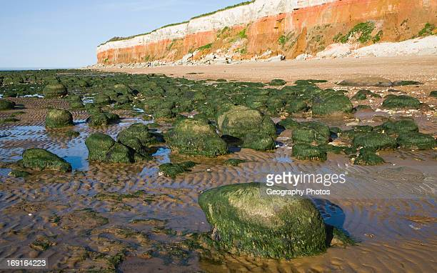 Chalk red chalk and carstone form striped cliffs of white red and orange at Hunstanton Norfolk England